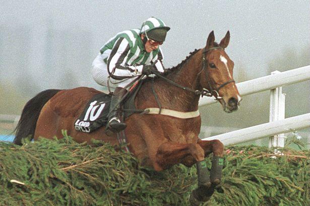 Lord Gyllene horse