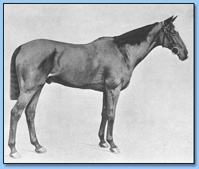 Manifesto horse